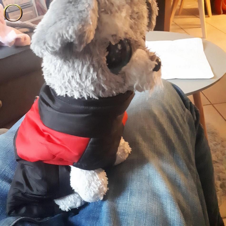 Veste - Manteau pour chien - harnais - Taille S