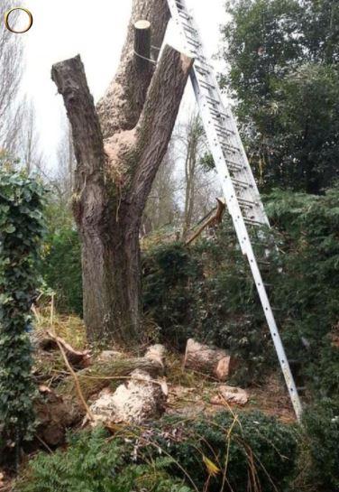 Arboriste - élagage - abattage - débroussaillage - taille de haie - Josselin et alentours